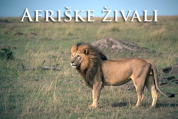 Afriske_zivali_2018